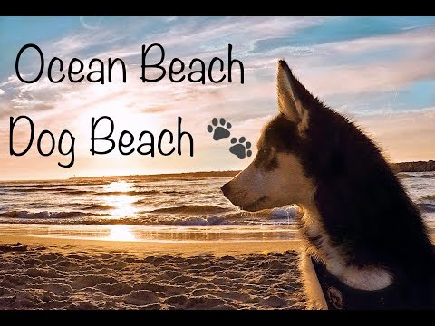 Ocean  Beach, Dog Beach, San Diego's Dogs  Friendly Places. 🐾   (Playa Para Perros En San Diego.)