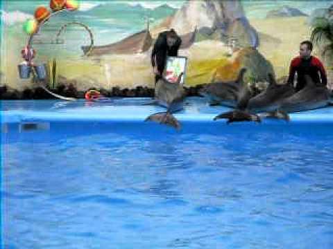 Дельфинарий, Ереван, дельфины SDC12553.AVI