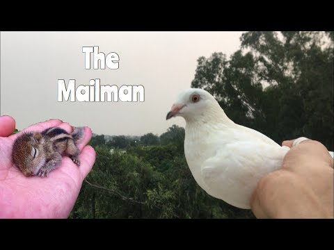 We Tried Sending A Letter By A Pigeon | Squirrel Baby!