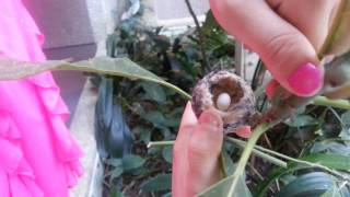 Humming bird nest with egg