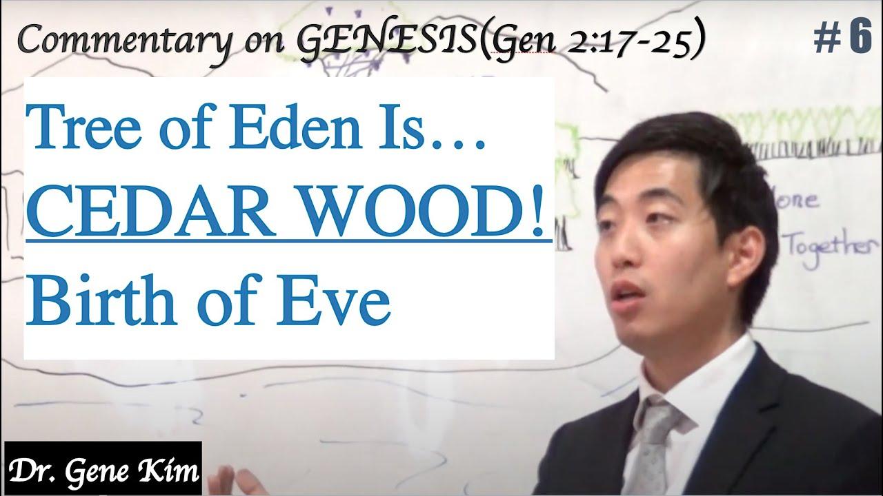 Tree of Eden Is...CEDAR WOOD! Birth of Eve (Genesis 2:17-25) | Dr. Gene Kim