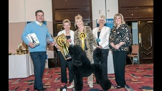 Poodle Of The Year 2014 Gala