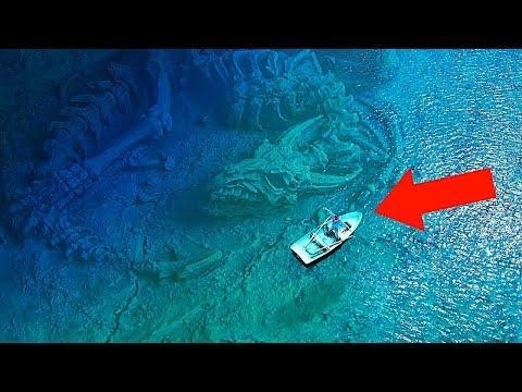 10 Самых Больших Морских Существ в Мире