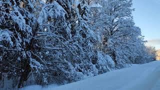 Природа в Истринском районе зимой.