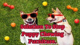 Use Puppy No Chew Spray And Save Your Belongings...