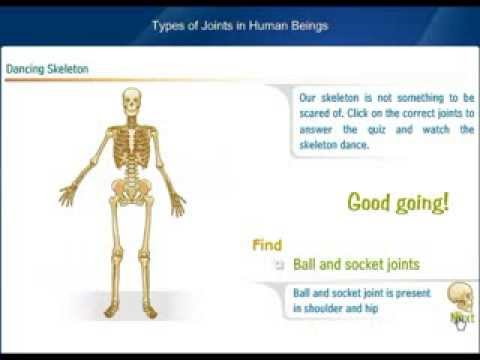 Types of joints in Human Beings - YouTube