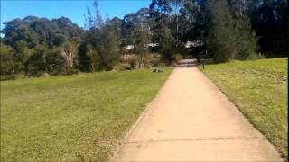 Affinity Dog Training Hills District Sydney Drop Stay Distance