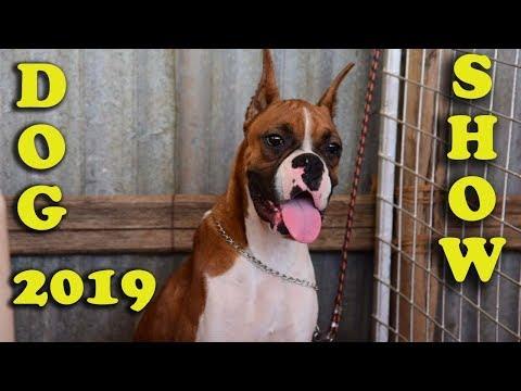Amazing Dog Show ! 2019    Thrissur