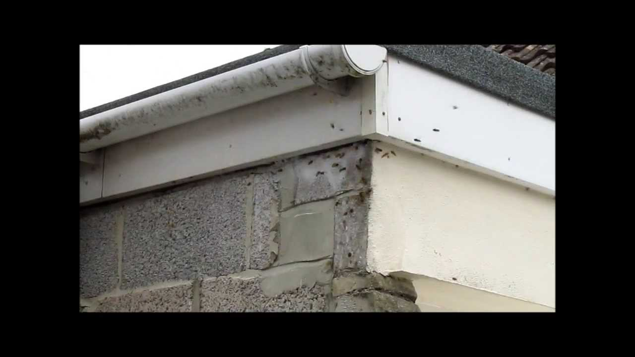 Giant Wasps Nest In A Garage Roof Youtube
