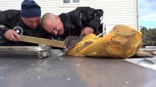 Американский морской черт поймал белорусского дайвера (без мата)