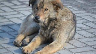 Волны моих мыслей: бродячие/бездомные собаки в Бишкеке и их отстрел.