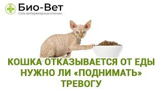 Кошка отказывается от еды нужно ли «поднимать» тревогу