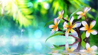 Спа музыка для релаксации ► Музыка для фона  Успокоение нервной системы  Журчание воды
