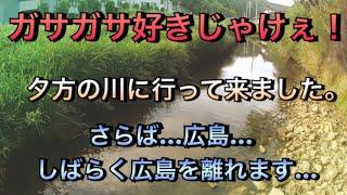 ガサガサ好きじゃけぇ!さらば広島!【ガサガサ】【日本淡水魚】