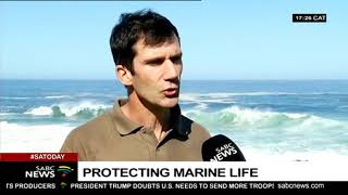Gambar cover Protecting marine life