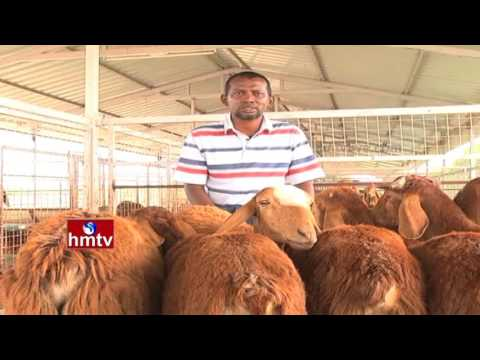 Sheep Diseases and Farm Herd-Health Safety | High Tech Farming | Nela Talli | HMTV
