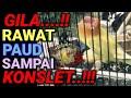 Tips Lovebird Konslet Cara Rawat Lovebird Dari Paud Sampai Konslet Kisah Sukses Proses Konslet  Mp3 - Mp4 Download