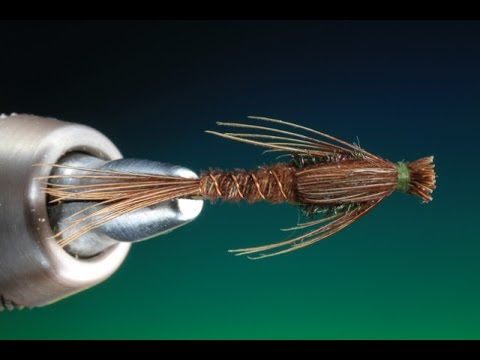 Tying the PTN with Barry Ord Clarke