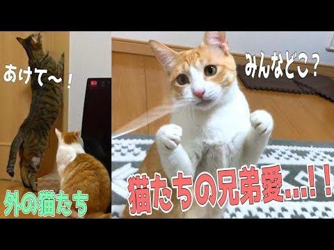 猫と2人きりになってみたら他の猫たちとの兄弟愛が凄かった…!!