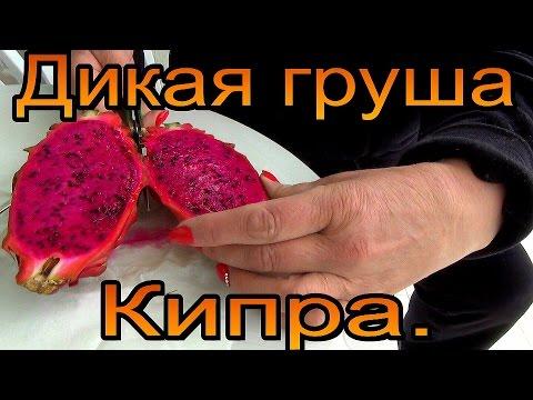 Съесть кактус... плоды кактуса опунции.