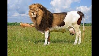 Кто живет в Южной Америке, редкие животные.