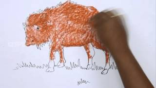 How to Draw a Bison