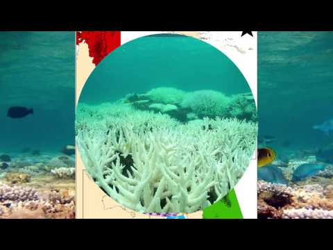 This Is What The Barrier Reef Looks Like Months After The Bleaching Crisis Began