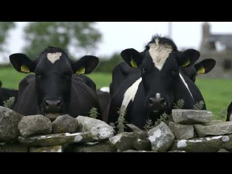 Teagasc - Careers in Dairy Farming