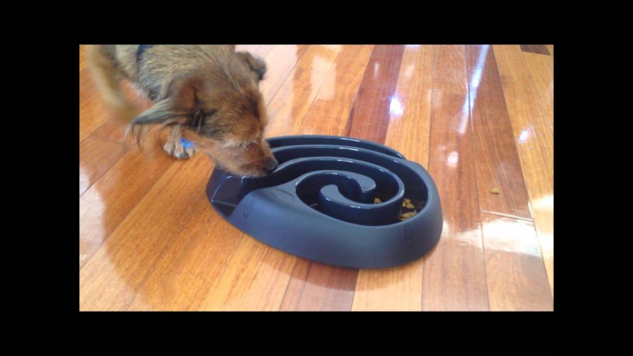Dog Bowl Feeding Vs Toy