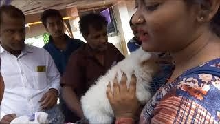 Spitz Puppy at Galiff Street l Cute Spitz puppy & Her New Friends l...