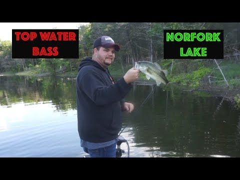 Norfork Lake, Topwater Bass