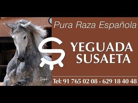 YEGUADA SUSAETA - ANDALUSIAN HORSES FOR SALE -VIDEO PRESENTATION