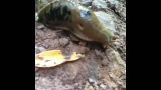 Slug trail