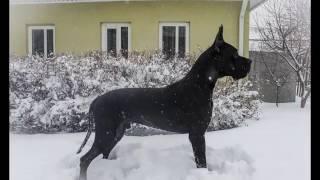 Гриша))) зима 2017