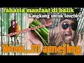 Cara Mengatasi Lovebird Macet Ngekek Jadi Gacor Kembali Langkah Awal Konslet  Mp3 - Mp4 Download