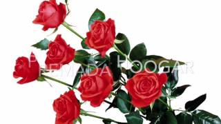 Premada hoogara cover song by dr Chandrashekar (s p b hit Kannada song)