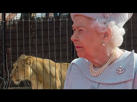 Queen opens London Zoo's Land of the Lions enclosure