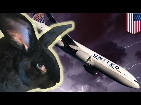 United Airlines rabbit: Dead giant bunny was 'locked in a freezer for 16 hours' - TomoNews