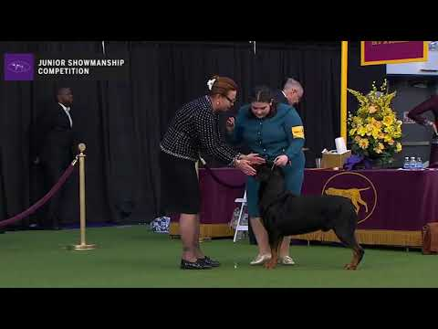 Junior Showmanship Competition Prelim #2 | Ring 6