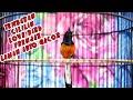 Pancingan Murai Batu Gacor Isian Cililin Lovebird Prenjak Cocok Untuk Memancing Emosi Lawan  Mp3 - Mp4 Download