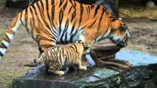 Wymarłe Gatunki Zwierząt ● Extinct Animals | HD