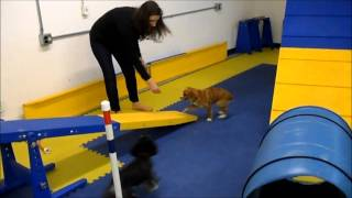Amy Beth Goes To Agility Class With Bitsy Dog.wmv