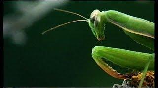 Как не стать добычей. Школа выживания в мире насекомых.