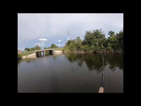Tried New Cape Coral Canal