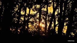 【癒し系BGM】ひぐらしの鳴き声3時間/Nature healing sound
