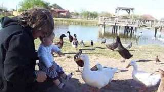 Cooper's First Time @ Ducky Park Feeding Ducks @ 7 Months