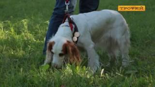 Русский охотничий спаниель - лучший друг и охотник