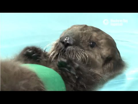 Saving Sea Otter 696: Learning to Swim