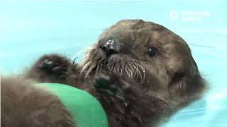 Saving Sea Otter 696: Learning to Swim