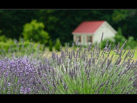 Против комаров: 11 растений, которые стоит посадить на даче